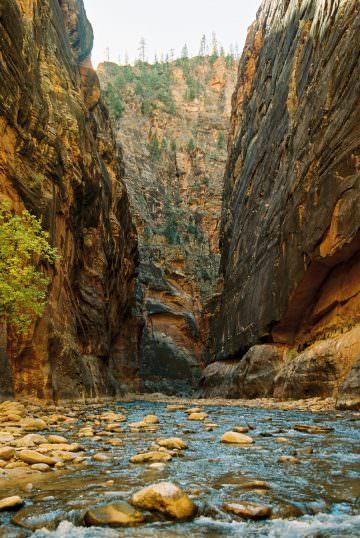 zion-national-park-photographer